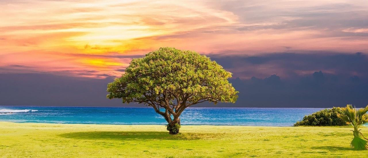 árboles Genealógicos Servicios Genealógicos Genealia